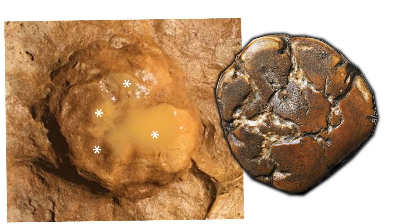 Gibraltar National Museum scientists collaborate with other Iberian scientists in a major palaeontological discovery Image